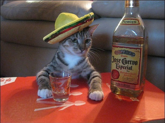 funny-Mexican-cat-sombrero-tequila.jpg
